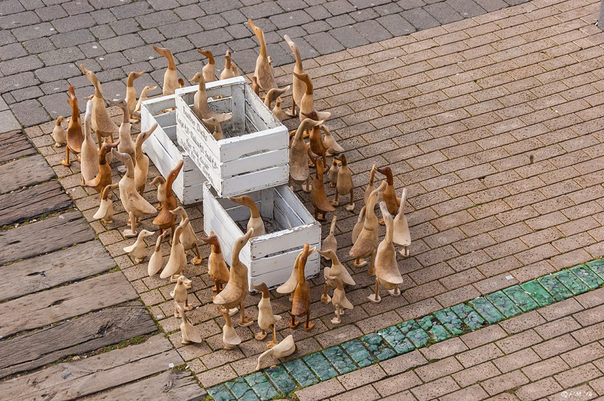 Wooden Ducks arranged around three wooden boxes Brighton Seafront promenade from above. 2014 eyeteeth.net