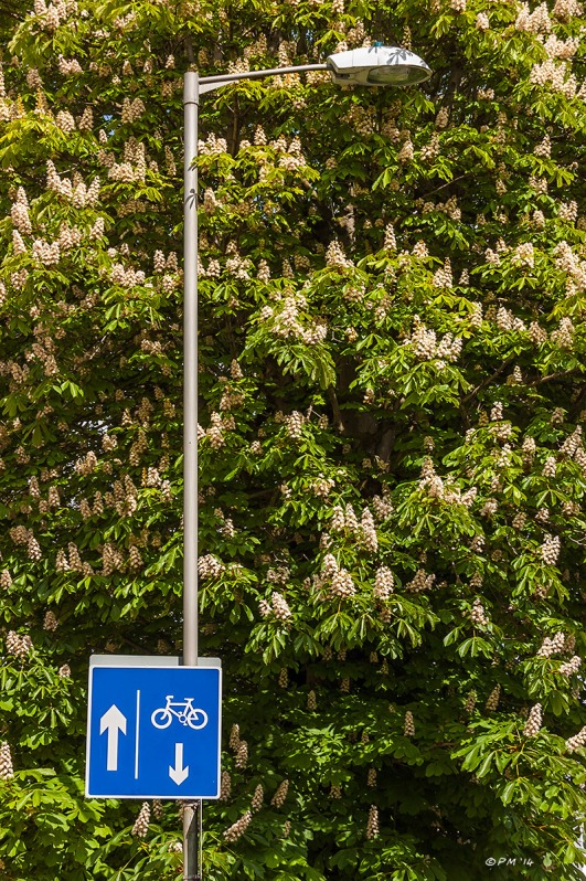 Horse Chestnut tree in flower, lamp post, cycle path sign Ditchling Rise Brighton 29/4/14 eyeteeth.net