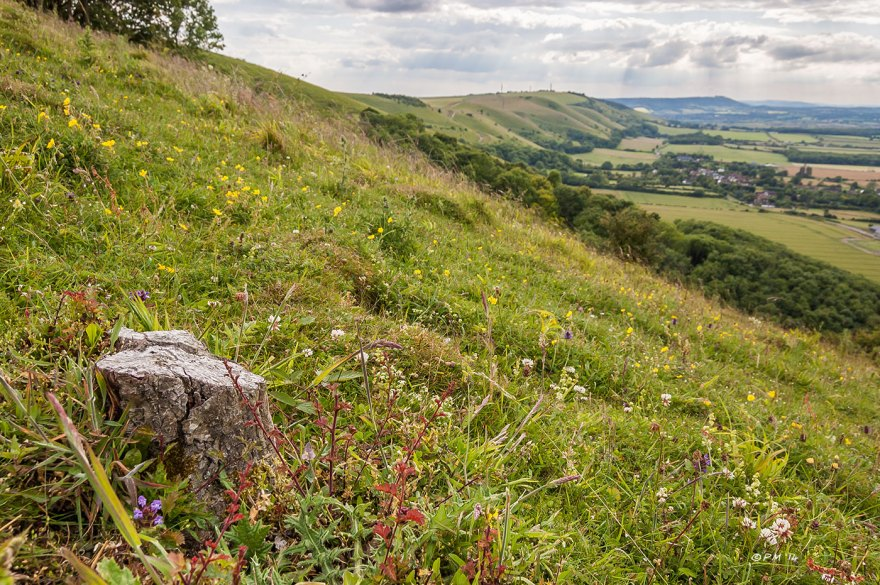 View west from Devils Dyke to Chanctonbury Ring with chalk grassland in foreground East Sussex P.Maton 2014 eyeteeth.net