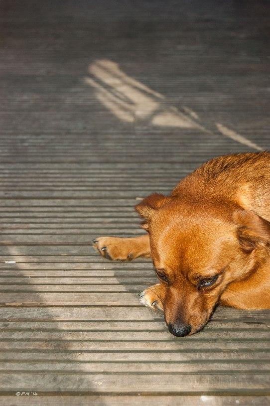 Dog looking bored lying on decking abstract Brighton, UK 2014 eyeteeth.net