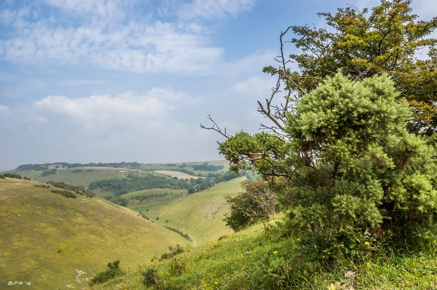 View of Devil's Dyke to Newtimber Hill with Gorse bushes in foreground hazy blue sky South Downs National Park Sussex, P.Maton 2014 eyeteeth.net
