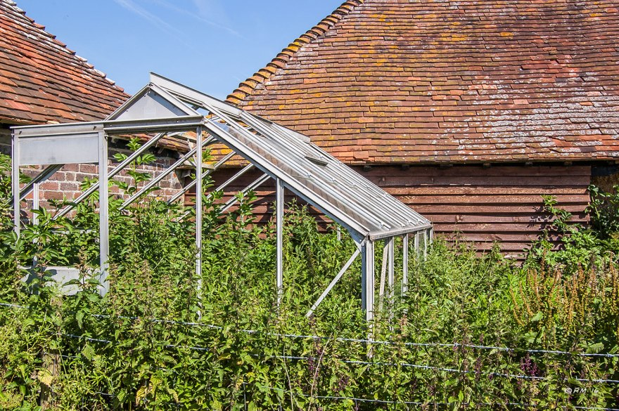 Greenhouse with no glass overrun with nettles old barns in background Sussex UK P.Maton 2014 eyeteeth.net