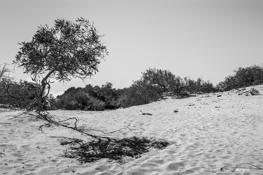 Bush casting shadow across sand Gelemis Turkey. Monochrome landscape. P.Maton 05/09/2014 eyeteeth.net