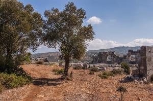 Olive trees and footpath next to Granarium ruins Gelemis Turkey. Colour landscape. P.Maton 2014 eyeteeth.net
