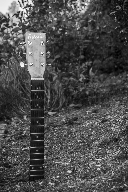 Guitar fret board and machine head protruding from earth in flower bed in Preston Park, Brighton UK. Monochrome portrait. © P.Maton 2014 eyeteeth.net
