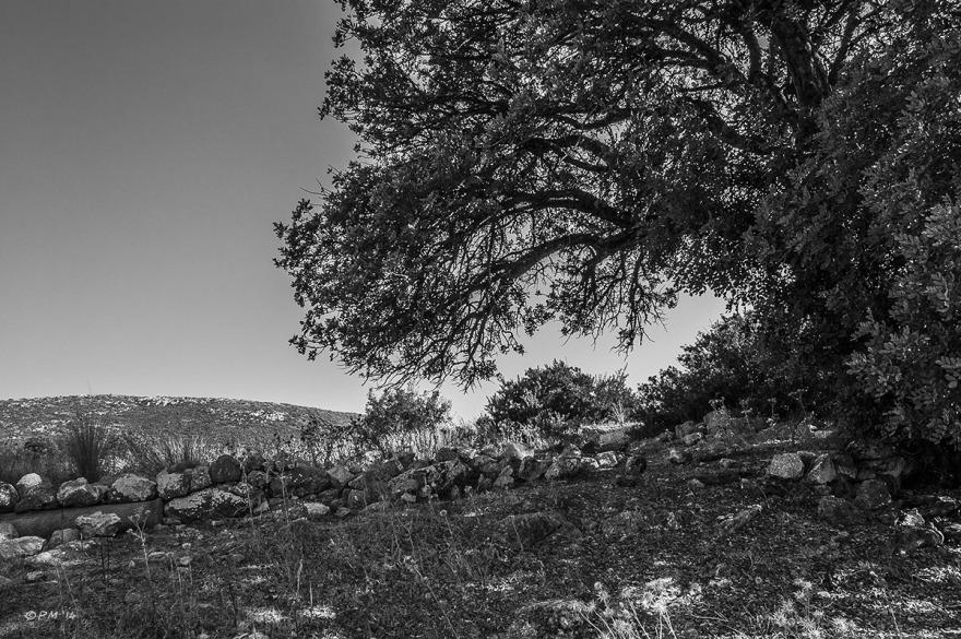 Backlit Olive tree and Lycean or roman remains in field. Monochrome landscape. Gelemis, Patara, Turkey. P.Maton 2014 eyeteeth.com