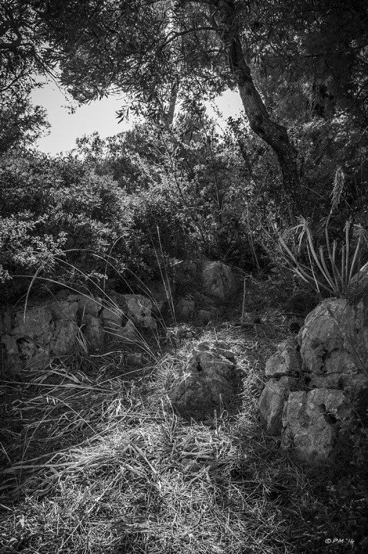 Light falling on rock through Olive trees. Monochrome. Patara, Turkey. P.Maton 2014 eyeteeth.net