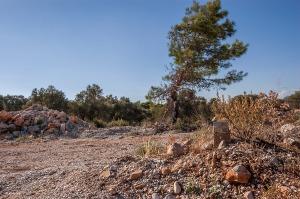 Rocks and tree beside dirt road. Patara Turkey. Landscape Colour. P.Maton 2014 eyeteeth.net