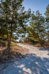 Dirt road snakes into distance under pine tree with sun through branches. Patara Turkey. Landscape Colour. P.Maton 2014 eyeteeth.net