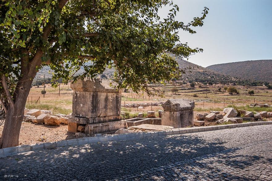 Tepecik Necropolis sarcophagi at roadside with olive tree, Gelemiş, Patara, Turkey. Colour landscape. P.Maton 09/09/2014 eyeteeth.net