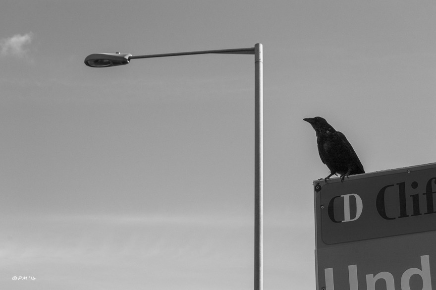 Crow standing on estate agent sign with street lamp in background. Abstract Monochrome landscape.  © P.Maton 2014 eyeteeth.net