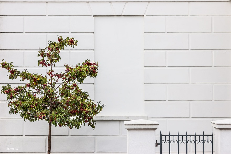 Bricked up window in white georgian town house with shrub bearing red berries. Abstract colour landscape. © P.Maton 2014 eyeteeth.net