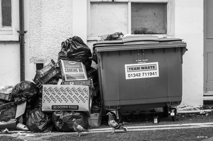 Refuse pile next to wheely bin at side of cafe with two pigeons in from to box of eggs. Monochrome landscape. © P.Maton 2014  eyeteeth.net