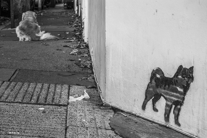 Dog sitting on pavement sidewalk with dog stencil graffiti on corner of building. Brighton UK. Monochrome Landscape. © P. Maton 2014 eyeteeth.net