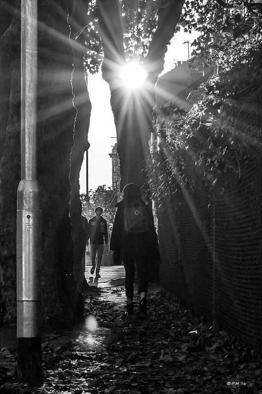 People passing on pavement between trees with sun flare through branches, Chatham Place Brighton UK. Monochrome Portrait. © P. Maton 2014 eyeteeth.net