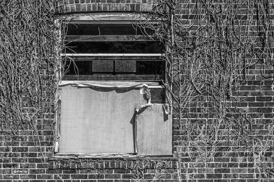 Partially boarded up window in old brick building draped with dead Ivy. Lewes YMCA building Westgate Street Lewes East Sussex. Abstract Monochrome Landscape. © P. Maton 2014 eyeteeth.net