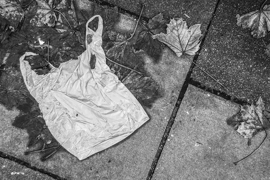 Discarded plastic bag lying on ground resembling a vest among autumn leaves on paving slabs. Monochrome Landscape. © P. Maton 2014 eyeteeth.net