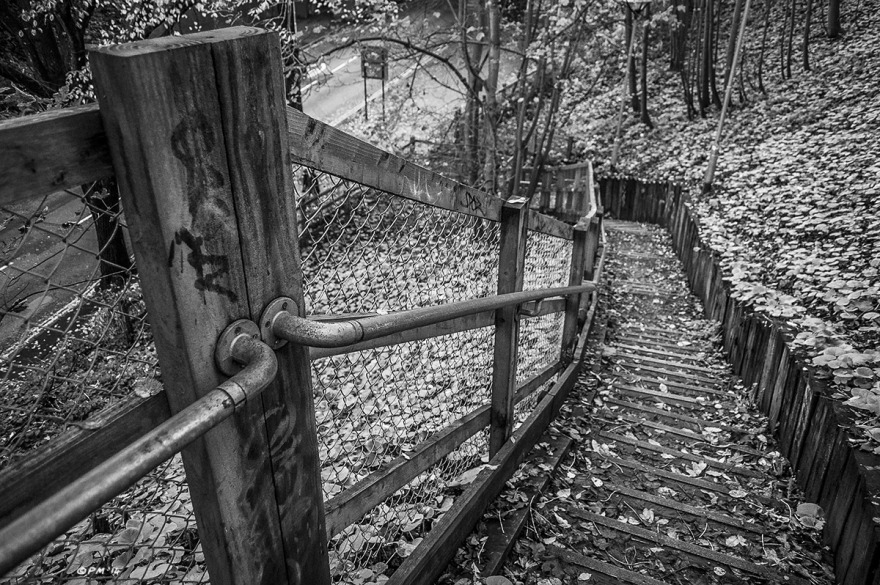 Railing and steps on leafy slope leading down to Old Shoreham Road , Brighton UK. Monochrome Landscape. © P. Maton 2014 eyeteeth.net