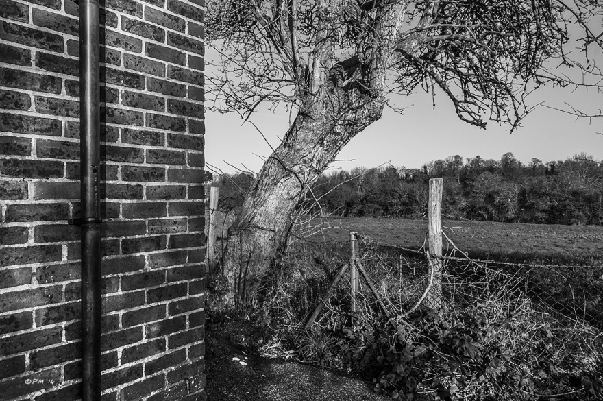 Brick wall with drain pipe juxtaposed against tree, fence and fields beyond. Land port Boys Club, Lewes East Sussex. Monochrome Landscape. © P. Maton 2014 eyeteeth.net