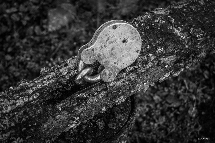 Padlock on simple rustic wooden gate with fungus. Monochrome Landscape. © P. Maton 2014 eyeteeth.net