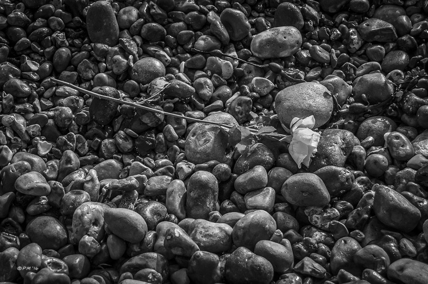 Cut Rose washed up on shingle beach, Brighton UK. Monochrome Landscape. © P. Maton 2014 eyeteeth.net