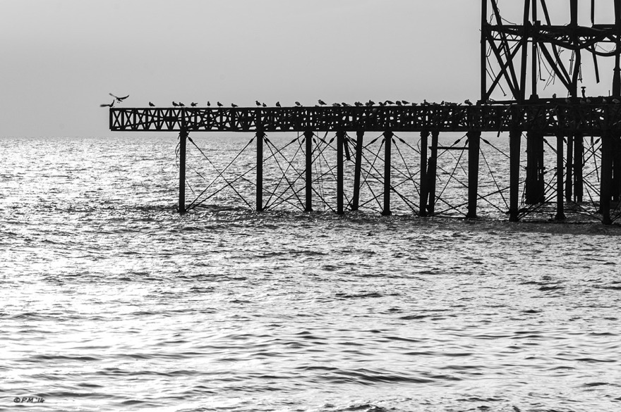 Section of West Pier ruins with gulls sitting on girder structure and sunlight on the sea. Brighton UK. Monochrome Landscape. © 2014 P. Maton eyeteeth.net