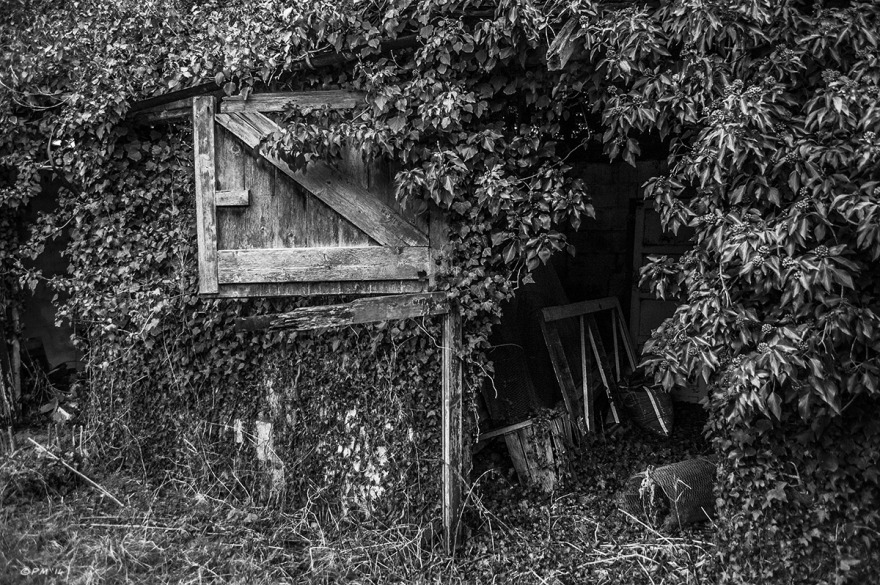 Abandoned stable with rotten door hanging open covered in Ivy. Ford Lane, Frilford Oxfordshire UK. Monochrome Landscape. © P. Maton 2014 eyeteeth.net