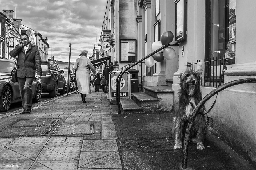 Dog waiting for owner outside building while people pass by. Lewes High Street. Lewes East Sussex UK. Street Photography. Monochrome Landscape. © P. Maton 2015 eyeteeth.net