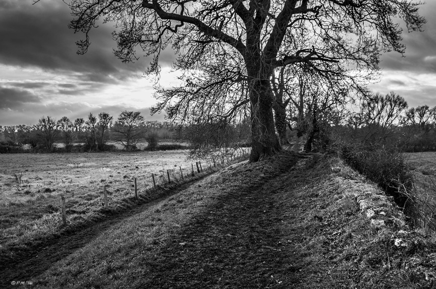Oak tree standing between foot paths next to remains of Roman flint wall. Calleva Atrebatum Silchester UK. Monochrome Landscape. © P. Maton 2014 eyeteeth.net