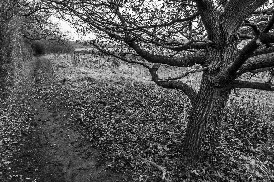 View east along church path from Frilford to Marcham with oak tree. Oxfordshire UK. Monochrome Landscape. © P. Maton 2014 eyeteeth.net
