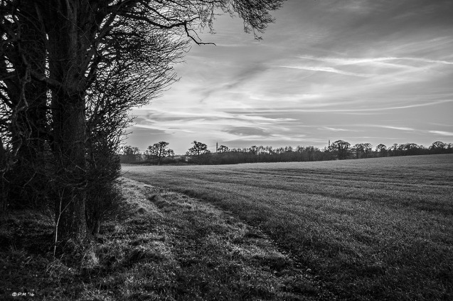 Trees and track at edge of field with sunset in background.Mortimer, Berkshire UK. Monochrome Landscape. © P. Maton 2014 eyeteeth.net