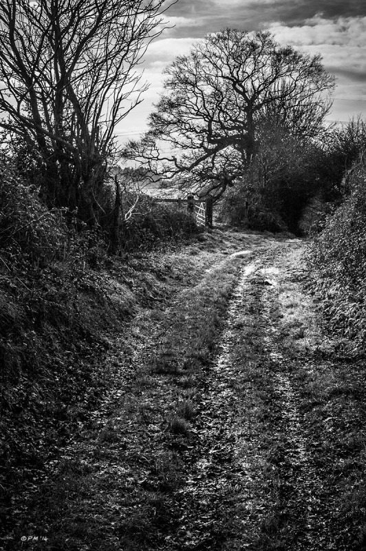 Ancient dirt track with gate and trees in hedges. Silchester, Berkshire UK. Monochrome Portrait. © P. Maton 2014 eyeteeth.net