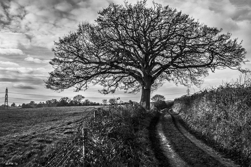 Spreading Oak Tree silhouetted next to ancient trackway with clouds in sky. Monochrome Landscape. © P. Maton 2014 eyeteeth.net