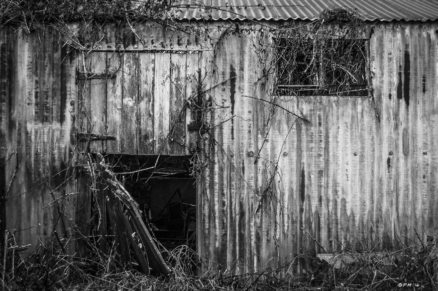 Abandoned corrugated iron stable with door hanging off . Ford Lane, Frilford Oxfordshire UK. Monochrome Landscape. © P. Maton 2014 eyeteeth.net