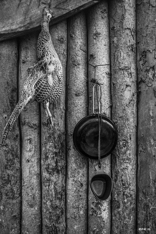 Dead Pheasant hanging from log cabin shingle next to cooking pan and cup. Ash down Forest East Sussex UK. Bushcraft. Monochrome Portrait. © P. Maton 2015 eyeteeth.net