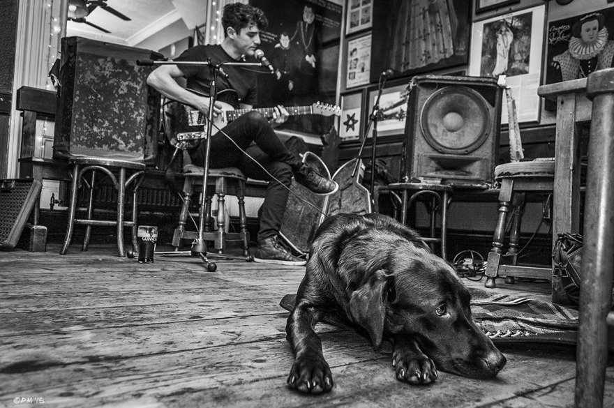 Black Labrador dog lying on wooden floor with folk singer Lex in background at the Shakespeare's Head Pub Brighton UK. Monochrome Landscape. © P. Maton 2015 eyeteeth.net