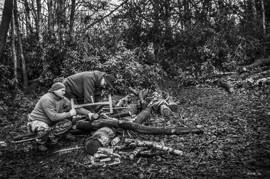 Man sawing fire wood with a frame saw  aided by another man, sweet chestnut and Birch logs with rhododendron shrubs and woodland in background. Hind leap Warren, Ashdown Forest, East Sussex UK. Bushcraft. Monochrome Landscape. © P. Maton 2015 eyeteeth.net
