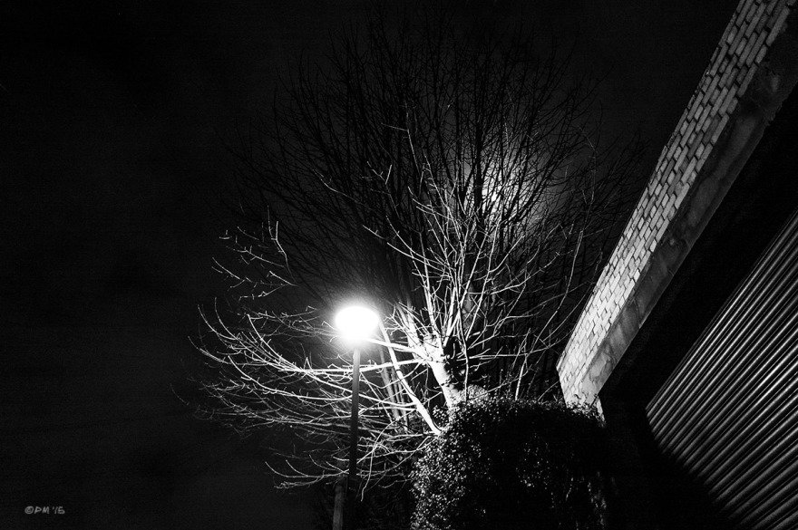 Tree illuminated by street lamp and silhouetted by moonlight. Abstract, street photography. York Grove, Brighton UK. Monochrome Landscape. © P. Maton 2015 eyeteeth.net