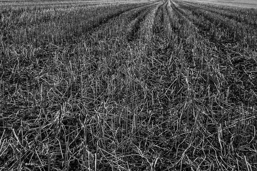 Rows of stubble in field converging in the distance. March Oxfordshire. Monochrome Landscape. © P. Maton 2014 eyeteeth.net