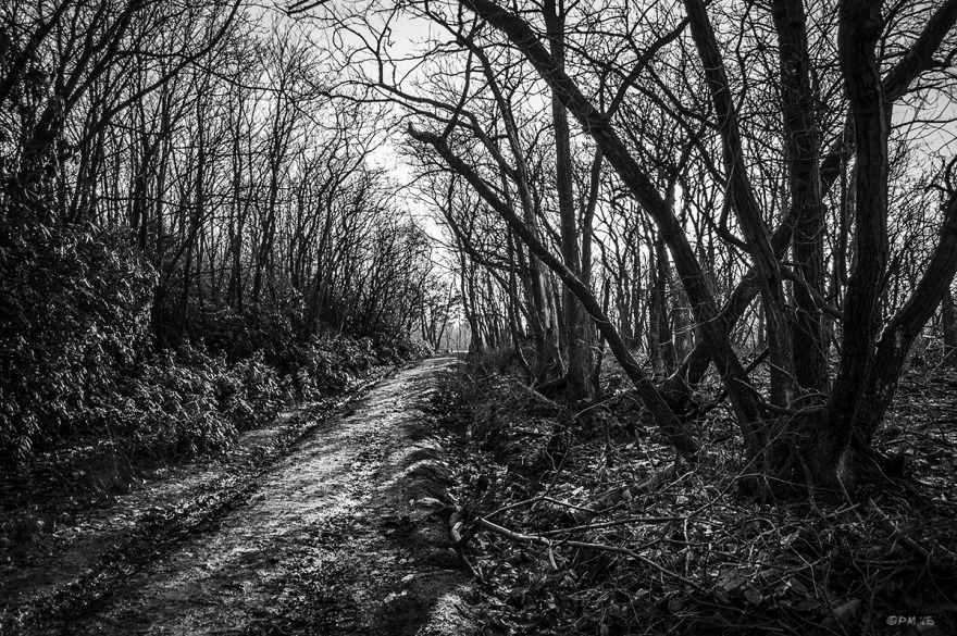 Dirt track between coups of Sweet Chestnut Coppice, Hindleap Warren, Ashdown Forest, East Sussex UK. Monochrome Landscape. © P. Maton 2015 eyeteeth.net