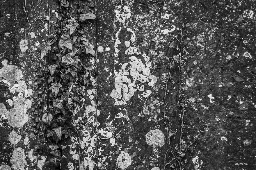 Lichen and Ivy on side of old stone tomb. All Saints Church Marcham Oxfordshire UK. Monochrome Landscape. P. Maton 2014 eyeteeth.net