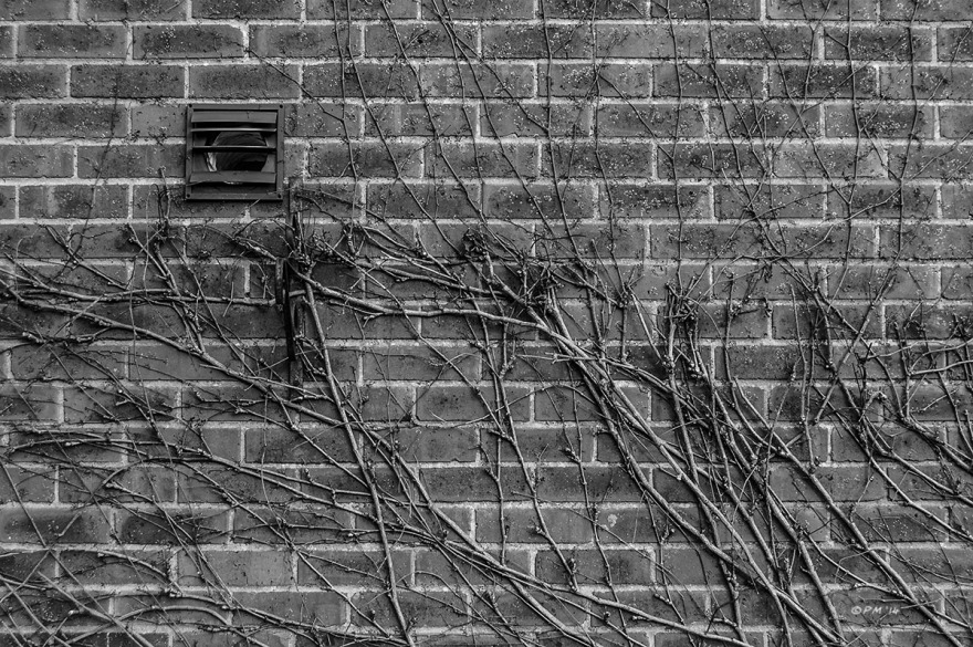 Slatted extractor vent in brick wall with creeping plant. Mortimer Berkshire UK. Monochrome Landscape. © P. Maton 2014 eyeteeth.net