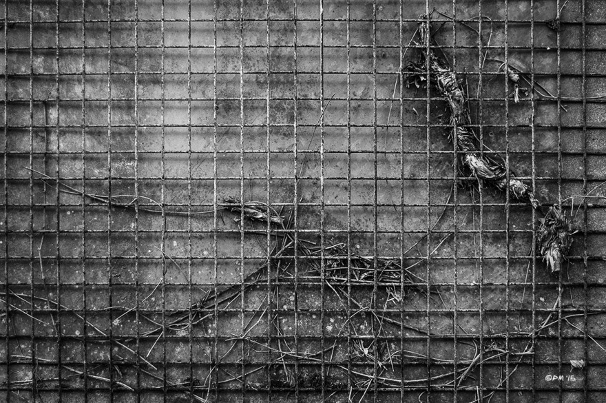 Metal grid fence interwoven with plant remains . Western Esplanade Hove UK. Monochrome Landscape. © P. Maton 2015 eyeteeth.net