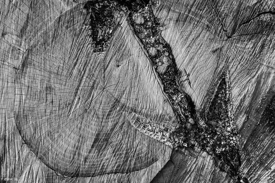 Chainsaw marks on cut face of Ash tree stump with arrow shaped rift and growth rings, Newtimber Hill East Sussex UK. Abstract Monochrome Landscape. © P. Maton 2015 eyeteeth.net
