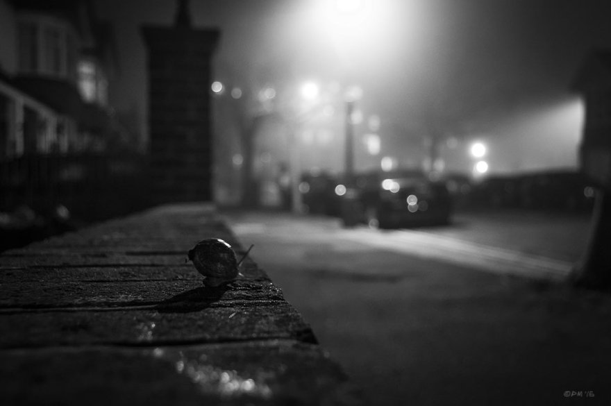 Snail heading along wall towards foggy street at night. Hove east Sussex UK. Monochrome Landscape. © P. Maton 2015 eyeteeth.net