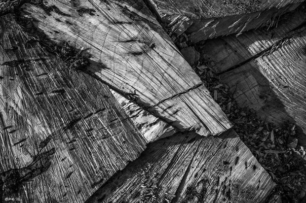 Intersecting chainsaw marks on cut face of Ash tree stump with rifts and growth rings, Newtimber Hill East Sussex UK. Abstract Monochrome Landscape. © P. Maton 2015 eyeteeth.net