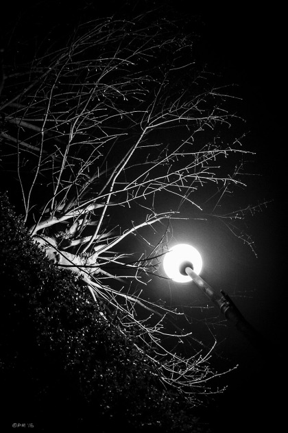 Street lamp light illuminating Ash tree. Brighton UK Abstract Monochrome Portrait. © P. Maton 2015 eyeteeth.net