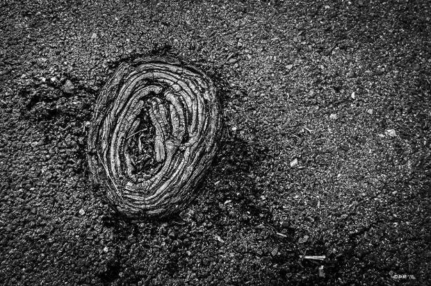 Elm tree root emerging from asphalt path. Hove UK. Abstract Street Monochrome Landscape. © P. Maton 2015 eyeteeth.net