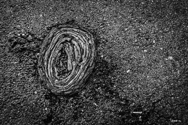 Elm tree root emerging from asphalt path. Hove UK. Abstract Street Monochrome Landscape. © P. Maton 2015 eyeteeth.net