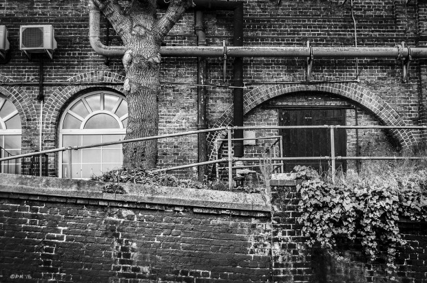 Victorian brick industrial building with Elm tree, pipes, arches and windows with railings and Ivy spilling over wall. Urban. Old Shoreham Road Brighton UK. Industrial Monochrome Landscape. © P. Maton 2015 eyeteeth.net